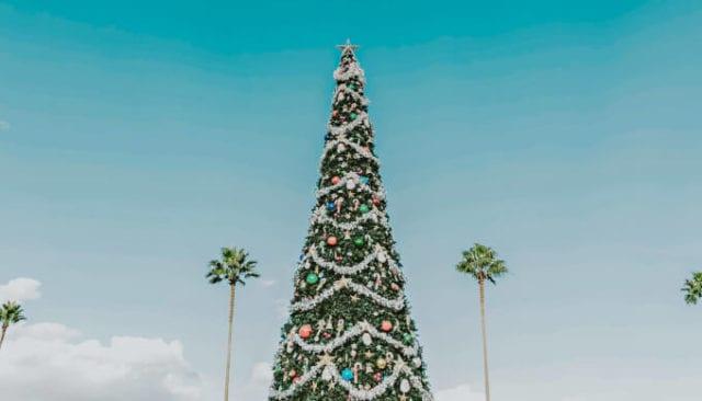 Saisonalen Content planen: 3 Fehler, die verhindern, dass dein Content zur richtigen Zeit die richtigen Menschen erreicht - Weihnachtsbaum und Palmen an sonnigem Tag